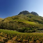 Upper Blaauwklippen Vintners Hop – Open Day June 2018