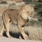 An offroad adventure – The Kgalagadi Transfrontier Park